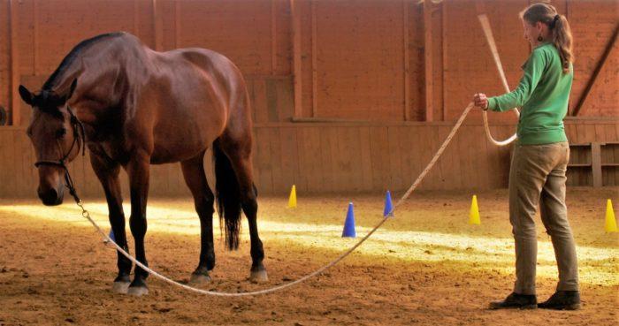 Ein Photo zeigt Julia Mehler bei der Bodenarbeit mit Pferd.