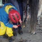 Ein Mädchen kratzt die Hufe eines Ponys aus.