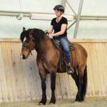 Heilpädagogik mit Pferd